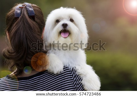 Dog and his owner / Brunette woman holding white maltese dog on her shoulder