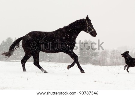 Dog and horse run towards each other on the winter meadow.