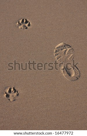 Dog and human footprints on the sand of a beach