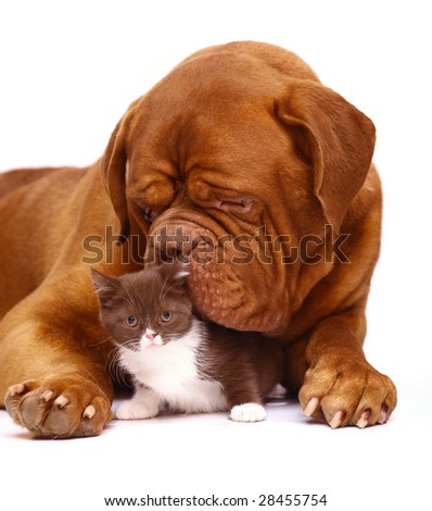 Dog and kitten.
