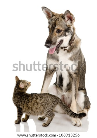 Dog And Kitten. isolated on white background