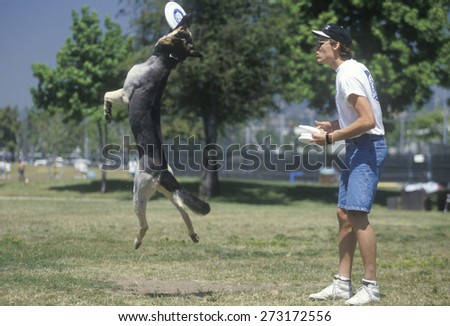 Dog and Man playing Frisbee in Canine Frisbee Contest, Westwood, Los Angeles, CA