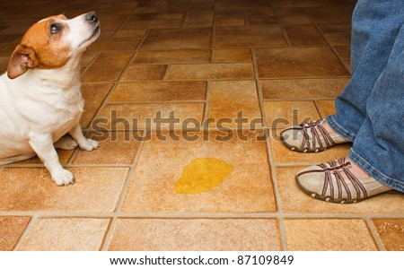 Dog and owner meet at a urine puddle