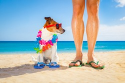 dog and owner sitting close together at the beach on summer vacation holidays, close to the ocean shore, while looking to the side