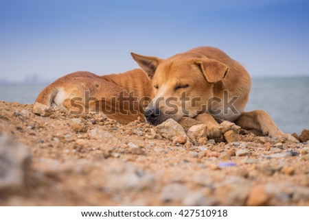 dog and sea #427510918