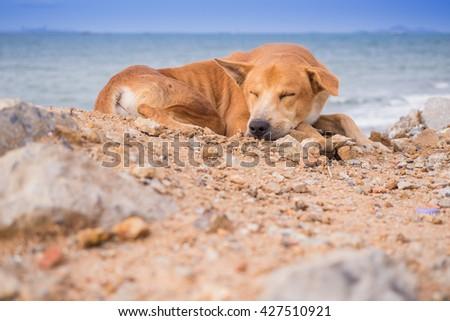 dog and sea #427510921