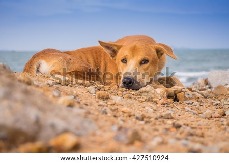 dog and sea #427510924