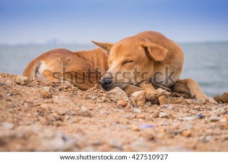 dog and sea #427510927