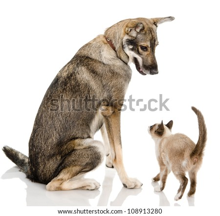 Dog and siamese kitten. isolated on white background