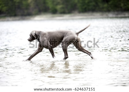 dog and water #624637151