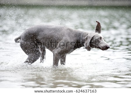 dog and water #624637163