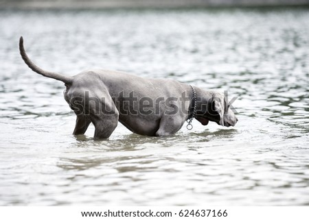 dog and water #624637166
