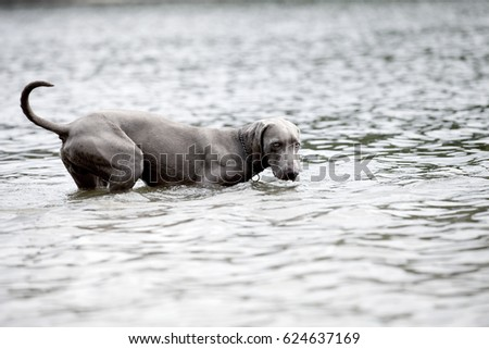 dog and water #624637169