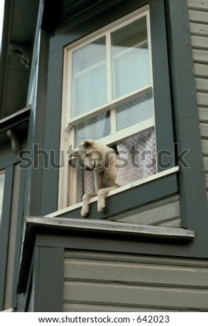 dog and window