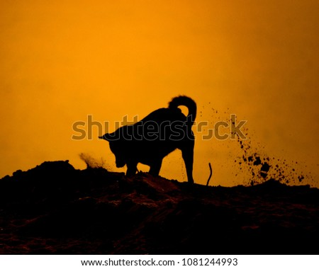 Dog are playing happily. Silhouette #1081244993