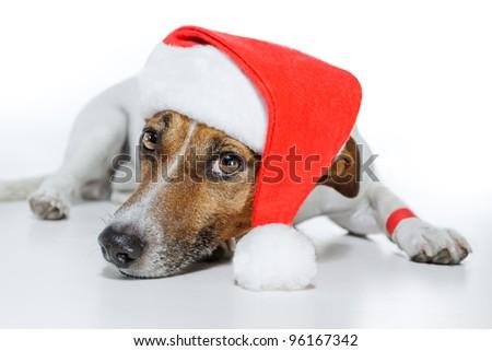 dog as santa