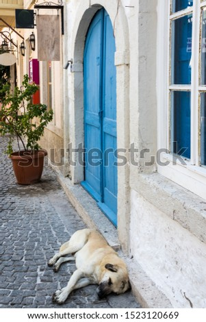 Dog asleep on a cobbled street, Alacati, Izmir, Turkey