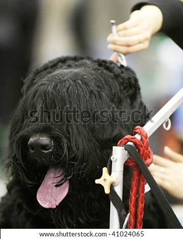 Dog at  a hairdressing saloon
