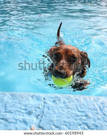 dog at a pool