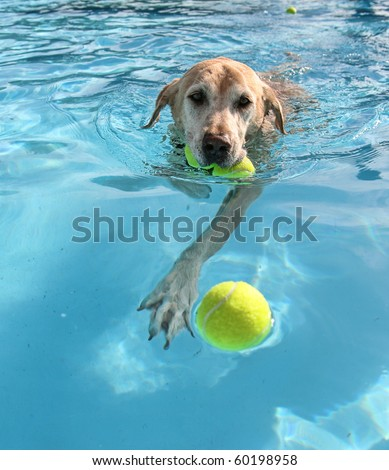 dog at a pool