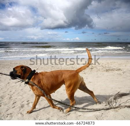 Dog at the beach - stock photo