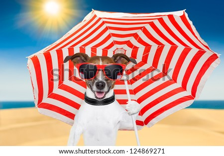dog at the beach under red and white umbrella