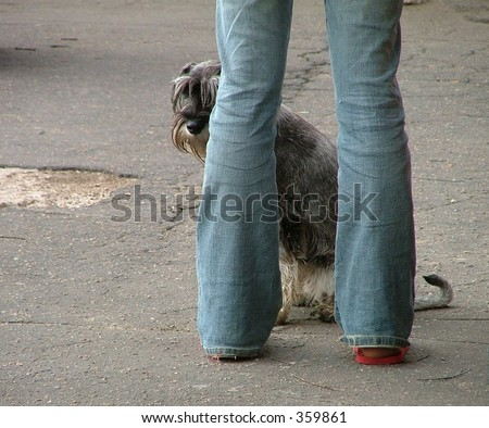 dog at the it's owner's feet