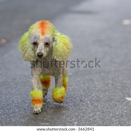 stock photo : Dog at the New York City Gay Pride Parade