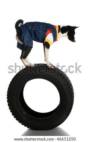 Dog balanced on the tyre casing