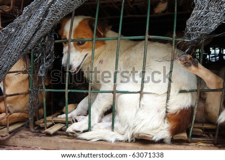 Dog behind a fence waiting for the freedom