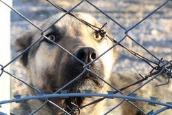 Dog behind metal fences in the park.