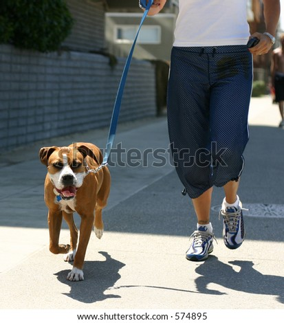 Dog being walked at Venice Beach.  English boxer?