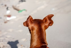 Dog between trash plastic pollution at sandy beach seashore resort.