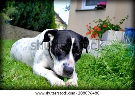 dog, big dog, white dog, guarding the garden, garden, ornamental garden, maintained, guard dog, happy dog, a beautiful garden, green, home, house, garden