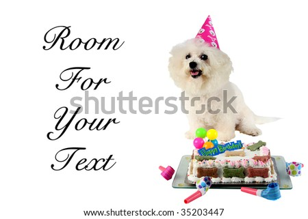 dog birthday isolated on white room for text