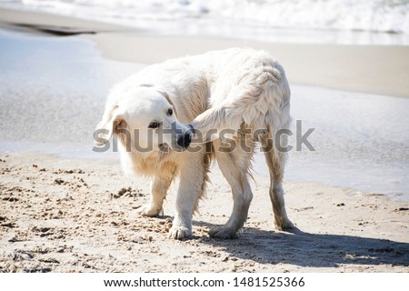 Dog biting his tail on a summer Baltic seashore. Сток-фото ©