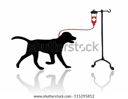 Dog - blood transfusion - isolated