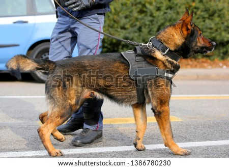 Dog Canine Unit of the police called K-9 during an anti-terrorist operation with legs of policeman #1386780230