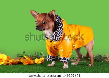 dog clothes, coveralls, dress. Pet products