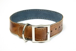 dog collar in leather pet accessory