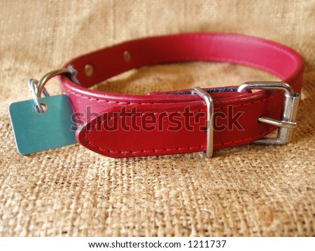 dog collar with identification tag
