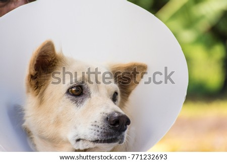 Dog Cone, Buster Collars, Inflatable Collars, And Elizabethan collar.   #771232693