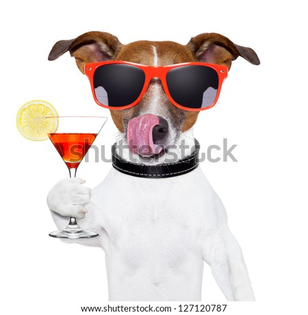 dog cooling with a martini refreshment cocktail