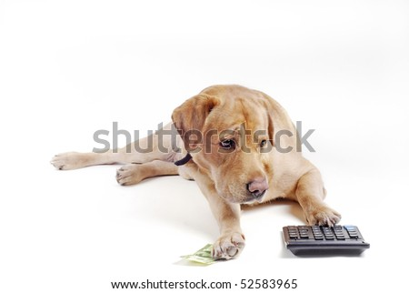 Dog count money on the calculator