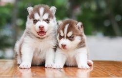 dog cute in nature, puppy dog,puppy love.