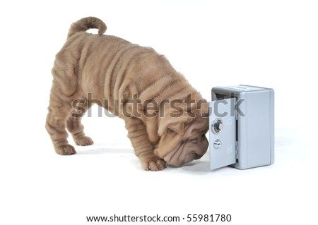 Dog detective smelling a crime near an open safe box