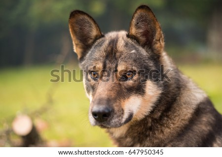 Dog. Dog on green grass, outdoors. #647950345
