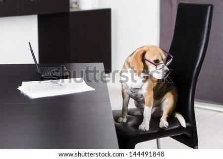 Dog doing the homework on the table with a laptop