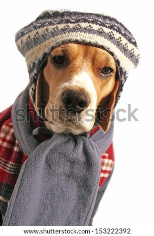 Dog dressed for winter