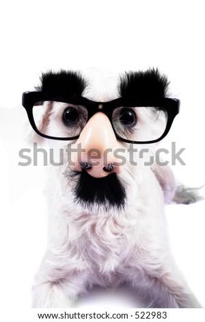 dog dresses up for hallowe en